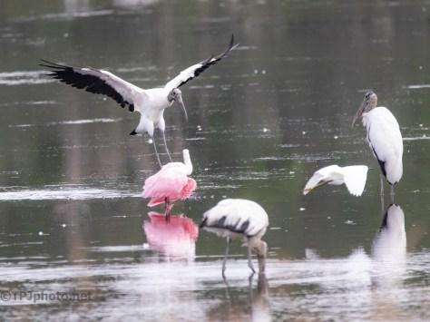 Stork Antics