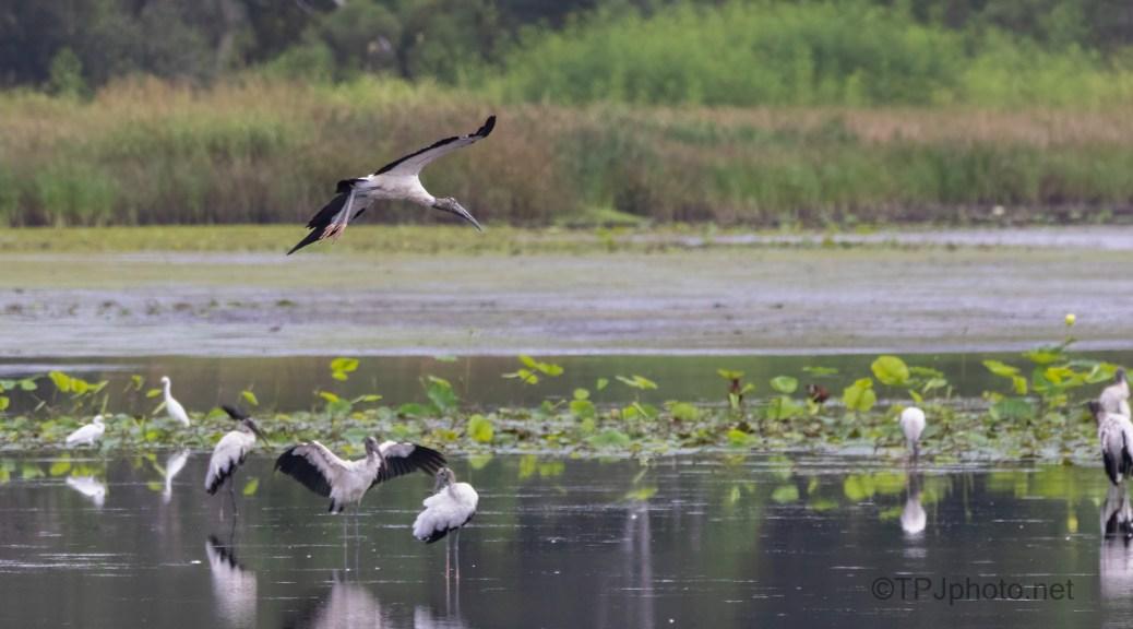 Watching Storks
