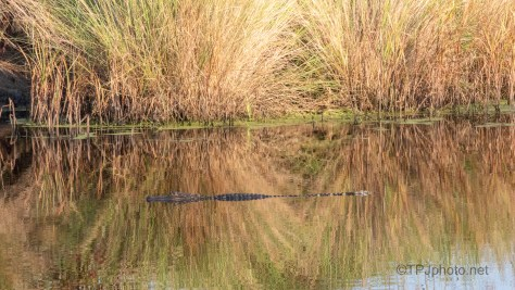 In No Hurry, Alligator