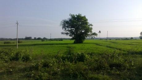 Udayagiri and Mysore 095
