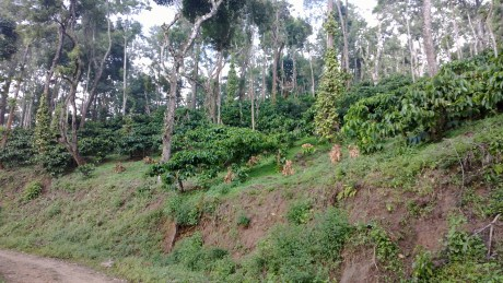 Udayagiri and Mysore 115