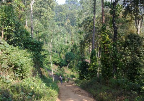 Udayagiri and Mysore 122