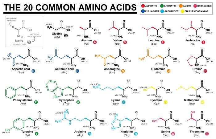 20の主要アミノ酸