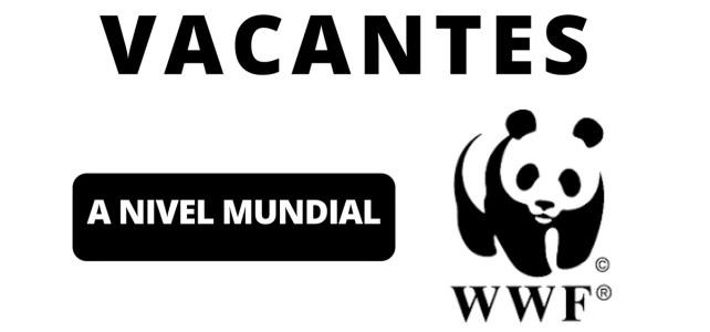 Vacantes abiertas con la WWF. Todas las nacionalidades