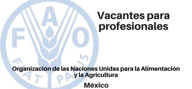 Diferentes Vacantes para profesionales FAO