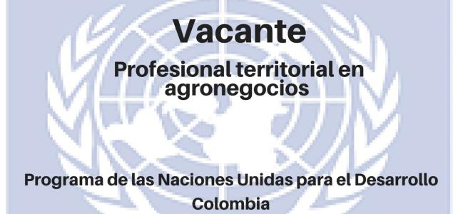 Vacante Profesional Territorial en Agronegocios PNUD