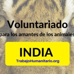 Voluntariado amante de animales India