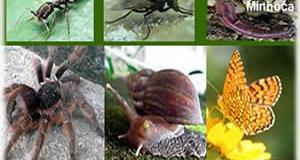 http://escolakids.uol.com.br/public/upload/image/invertebrados2_(1).jpg