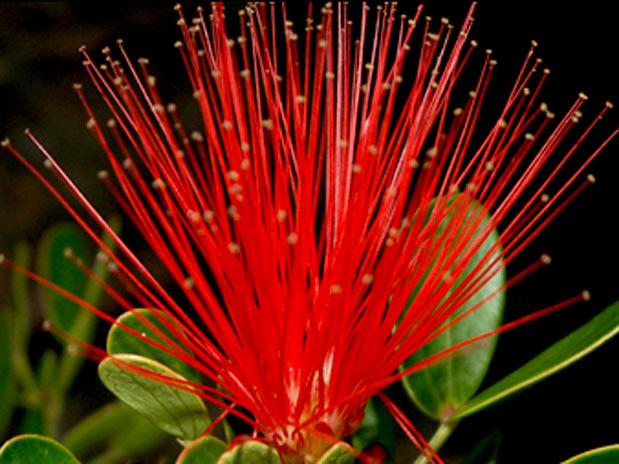 http://meioambiente.culturamix.com/blog/wp-content/gallery/flora-brasileira-com-mais-de-400-especies-em-extincao/flora-brasileira-com-mais-de-400-especies-em-extincao-12.jpg