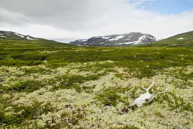 Paisagem da Tundra durante o verão
