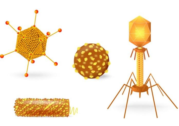 Resultado de imagem para zika virus infoescola