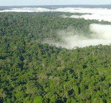 A Floresta Amazônica é uma das três grandes florestas tropicais do mundo. Essas podem ser caracterizadas em duas palavras: quentes e úmidas.