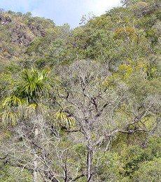 Muito parecido com a Savana, predominam no Cerrado arbustos, gramíneas e árvores esparsas.