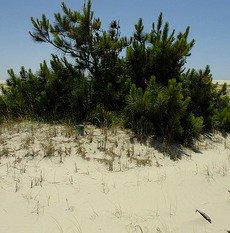 Solos arenosos, salinos e próximos ao mar são características da Restinga
