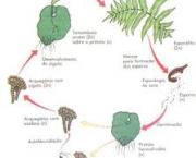 especies-comuns-de-pteridofitas-e-economia-3