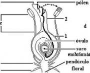 pecuaria-e-agricultura-pteridofitas-3