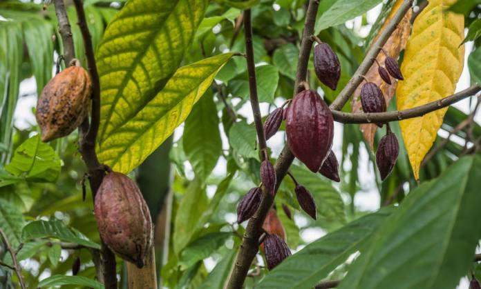 Muitas árvores apresentam frutos que são utilizados comercialmente.