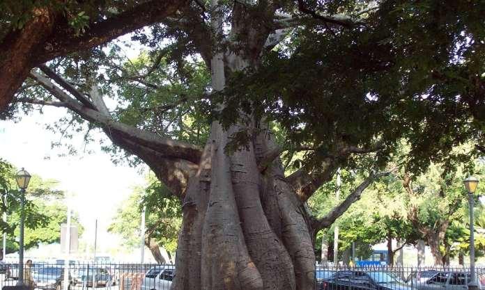 Por que o Dia da Árvore é comemorado no dia 21 de setembro?