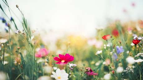 A primavera começa oficialmente nesta segunda no hemisfério sul