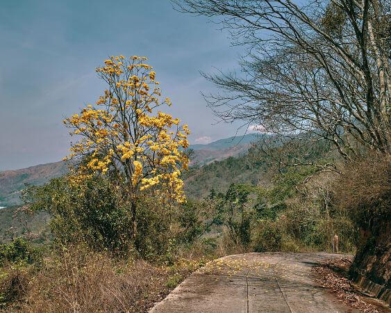O ipê-amarelo é uma das espécies que trazem mais cor ao Cerrado durante a estação seca de inverno.