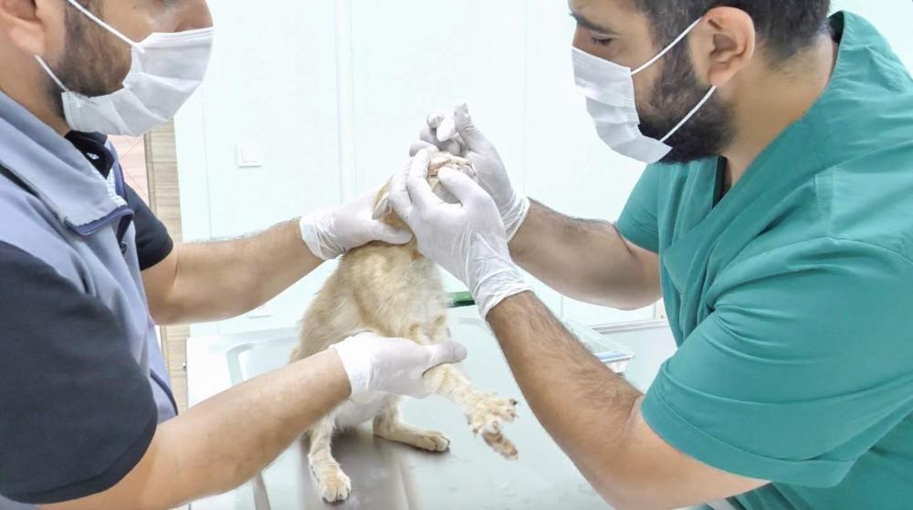 Ortahisar sokak hayvanlarını tedavi ettiriyor