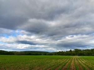 Feel the Fields