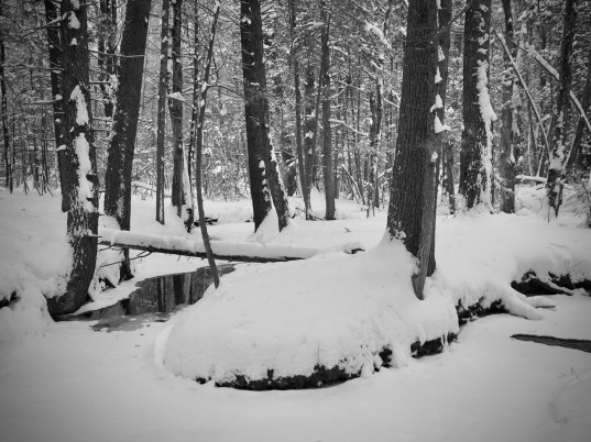Winding stream in the snowy woods.