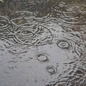Raindrops — copyright Trace Meek