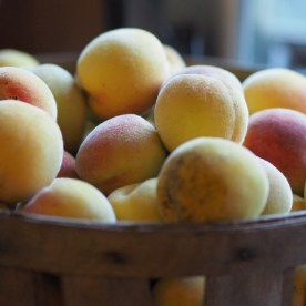 Peach harvest time — copyright Trace Meek