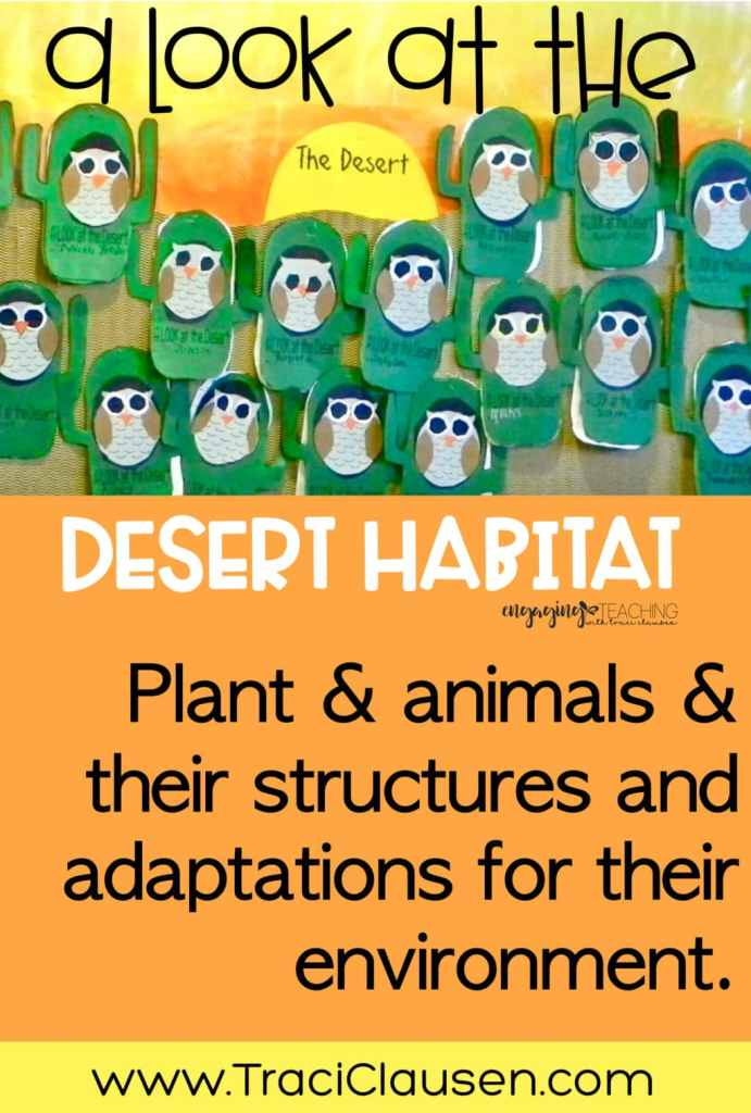 Desert cactus and owl bulletin board