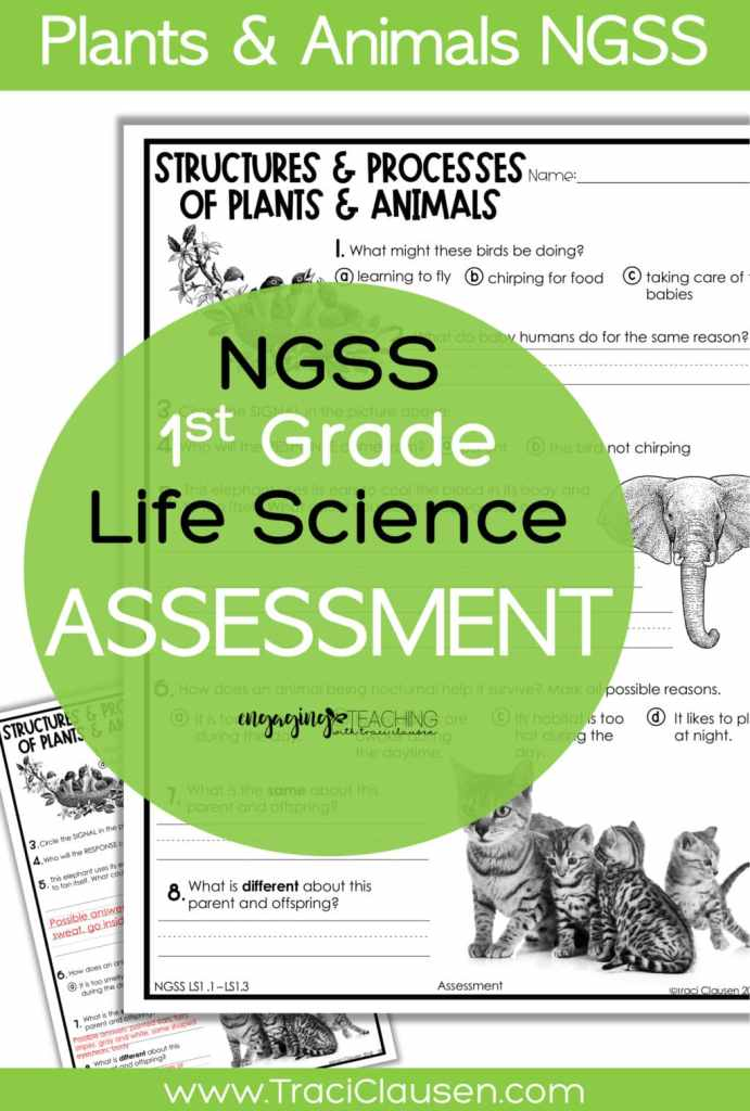 1st Grade Life Science NGSS Assessment