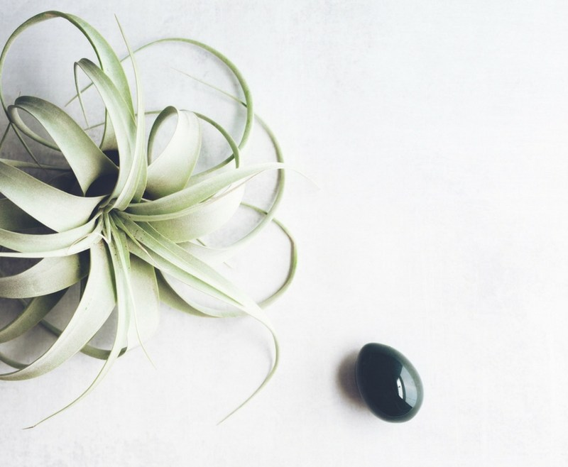 12 Essential Oils to Support Female Reproductive Wellness