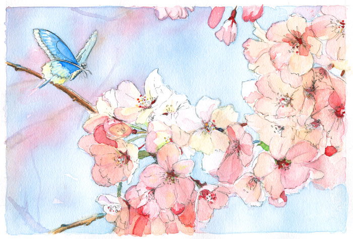 Japanese-Cherry-Blossom-Crop