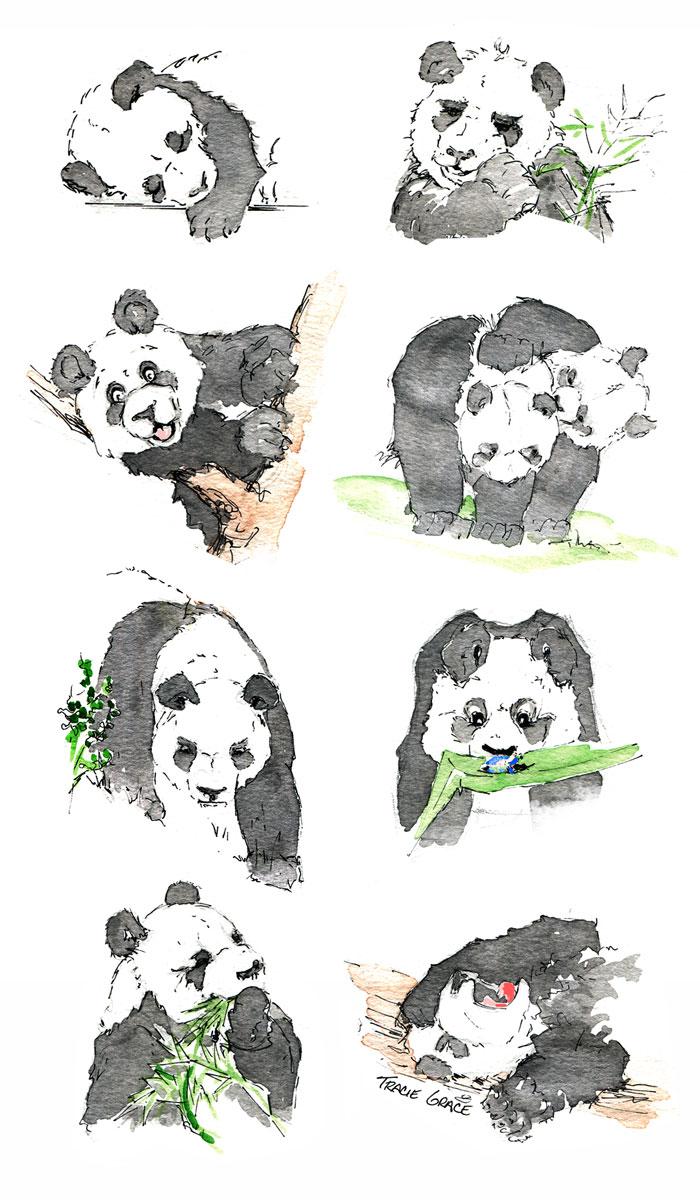 Panda-(web)
