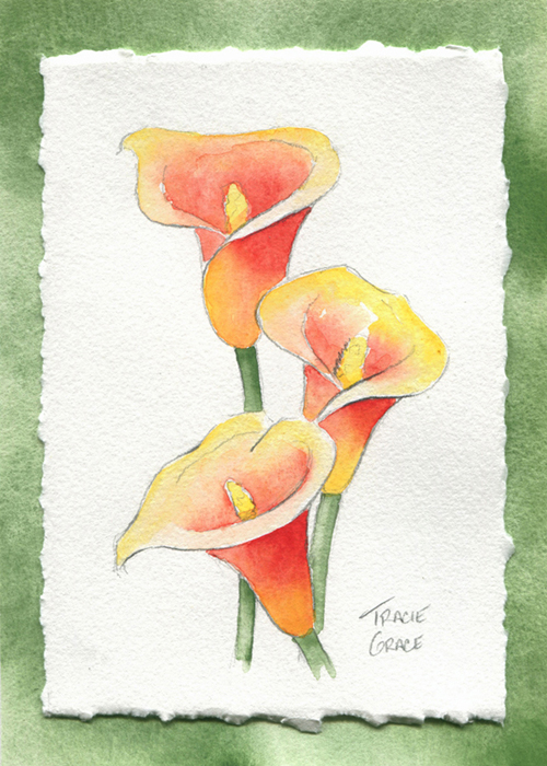 Calla Lily (mini web)