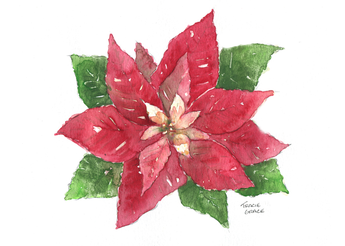 Poinsetta (web)