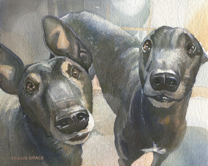 Dogs (web)