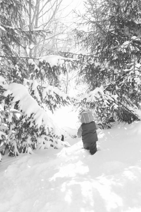TraciElaine.com   After the Blizzard
