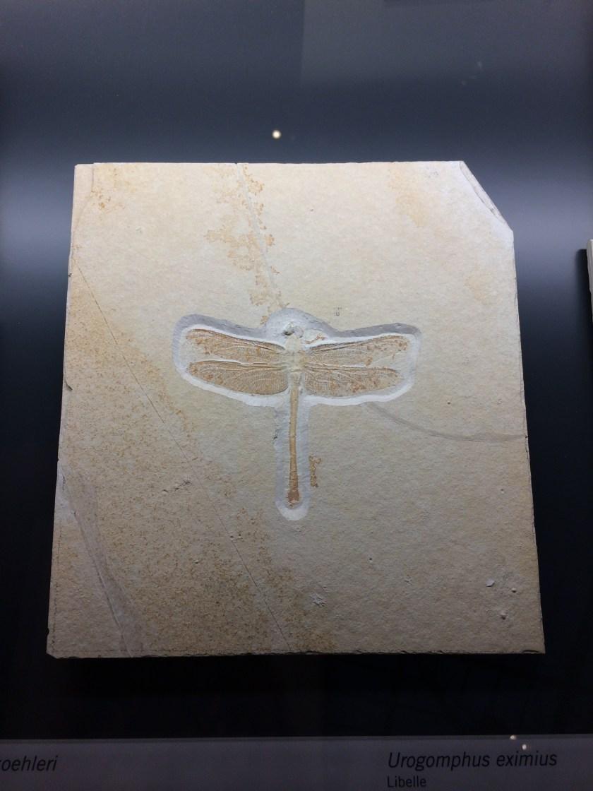 Museo di Storia Naturale di Berlino. Lebensraum - Berlino 2017