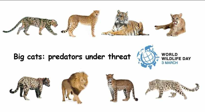 poster_IUCN