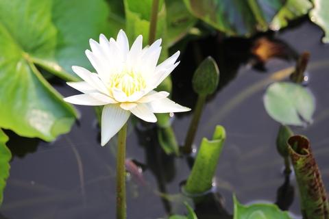 purity in yoga