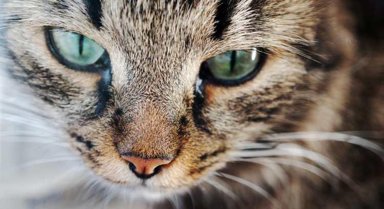 Gefahren für Katzen darauf sollte man achten_Beitragsbild