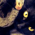 Zeckenschutz für Katzen