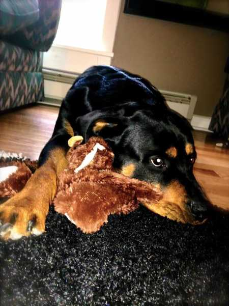 dog and teddy bear