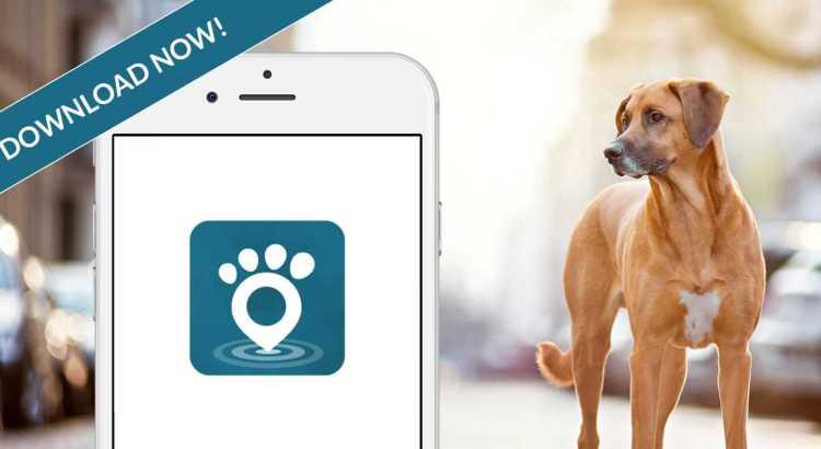 Tractive GPS Pet Finder