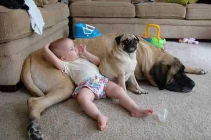 baby und hund entspannen