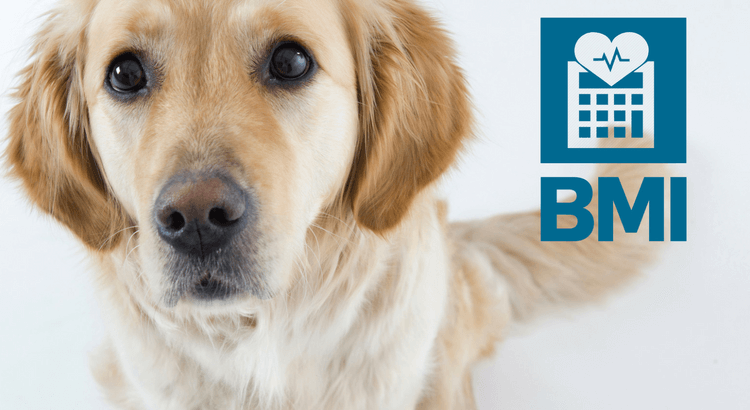 Your dog's BMI