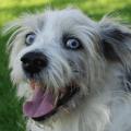 beliebteste Hundenamen und Hunderassen