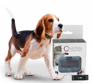 Gps Tracking Chips For Tools likewise GIQAtReNUJ story moreover Index moreover Biggest Bullmastiff Dog likewise Sim Card Gps Tracking Devices. on tiny gps tracking device