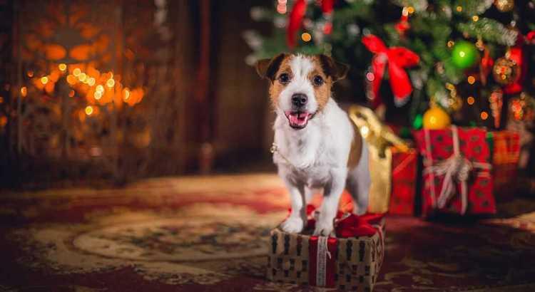 Weihnachtsgeschenke für Hunde